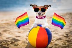 Собака гомосексуалиста ослабляя на пляже Стоковые Фото