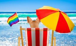 Собака гомосексуалиста ослабляя на шезлонге Стоковые Фотографии RF
