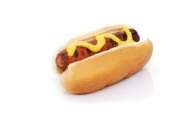 собака горячая Стоковое фото RF