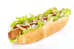 собака горячая Стоковые Изображения