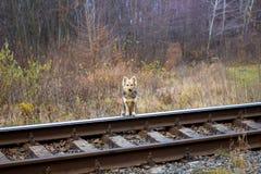 Собака готовит железную дорогу и ждет его master_ стоковое изображение rf