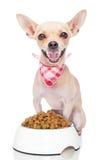 собака голодная Стоковая Фотография RF