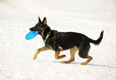 собака диска Стоковое фото RF