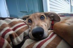 собака дней Стоковые Изображения RF