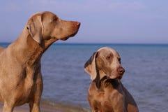 собака дня пляжа Стоковые Фотографии RF