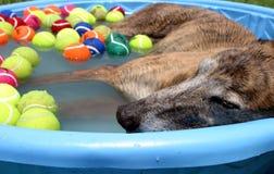 собака дня после полудня стоковое изображение rf