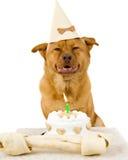 собака дня рождения счастливая стоковая фотография