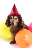 собака дня рождения Стоковое Изображение