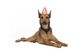 собака дня рождения Стоковое Изображение RF