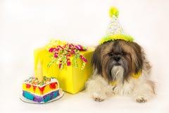 собака дня рождения Стоковая Фотография