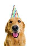 Собака дня рождения Стоковые Фото
