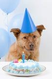 собака дня рождения стоковые изображения