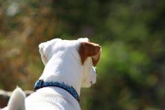 Собака дня Стоковые Фотографии RF