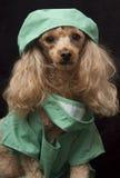 собака доктора Стоковое Изображение RF