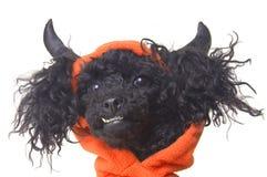 собака дьявола Стоковые Изображения RF