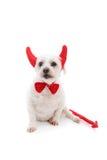 собака дьявола Стоковая Фотография RF