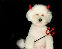 собака дьявола Стоковые Фотографии RF