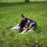 Собака лежа в парке Стоковая Фотография RF
