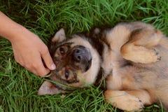 Собака лежа на его назад стоковые изображения rf