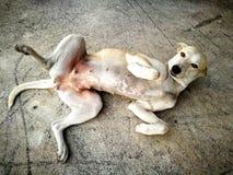 Собака лежа на улице Стоковое Изображение