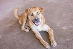 Собака лежит на бетоне Стоковые Фотографии RF