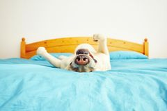 Собака лежит на кровати Стоковое фото RF