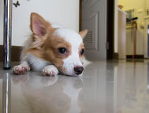 Собака лежит на поле стоковое изображение rf