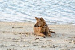 Собака лежит на пляже Стоковое Изображение