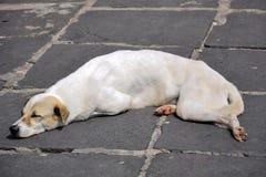 собака ленивая Стоковое Изображение