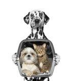 Собака держит его друзей в контейнере Стоковые Фотографии RF