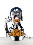 Собака ест с ложкой от шара Стоковые Изображения