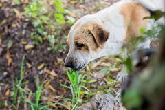 Собака ест траву стоковые фотографии rf