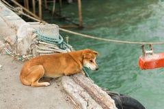 Собака ждать его предпринимателя Стоковое фото RF