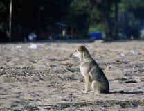 Собака ждет на песке Стоковые Фото