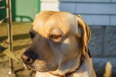 Собака ждет свое предпринимателя стоковые фотографии rf