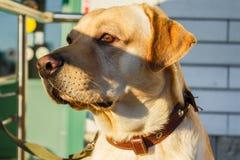 Собака ждет свое предпринимателя стоковые изображения