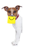 Собака желтого цвета не Стоковое Изображение RF