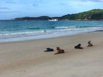 Собака, животное, море, небо, милое Стоковая Фотография