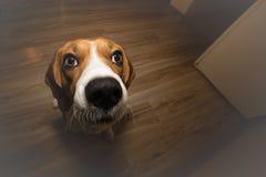 Собака ждать вознаграждение Стоковая Фотография RF