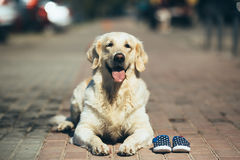 Собака ждать предпринимателя Стоковые Изображения