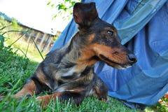 Собака ждать свое предпринимателя Стоковые Изображения