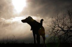 Собака завывая на луне стоковая фотография