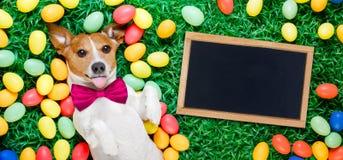 Собака зайчика пасхи с яичками Стоковые Изображения RF