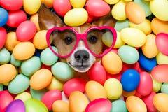 Собака зайчика пасхи с яичками Стоковые Фотографии RF