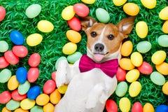 Собака зайчика пасхи с яичками Стоковая Фотография
