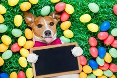 Собака зайчика пасхи с яичками Стоковые Изображения
