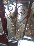 собака застенчивая Стоковое Изображение RF