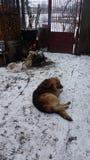 собака застенчивая Стоковые Изображения
