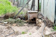 Собака защищая двор разбойников собач собака напольная стоковая фотография