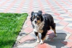 Собака защищая двор разбойников собач собака напольная стоковые изображения